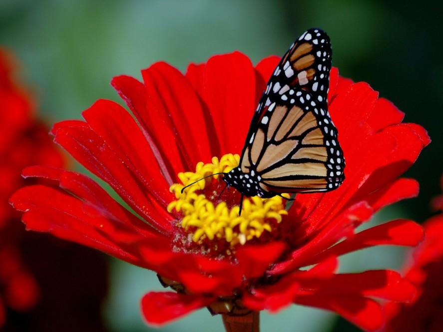 Sweet Nectar1
